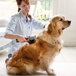 Dyson Groom Animal Vacuum Cleaner