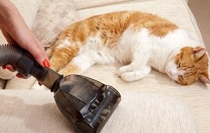 Aspirateur animal mini turbobrosse chat